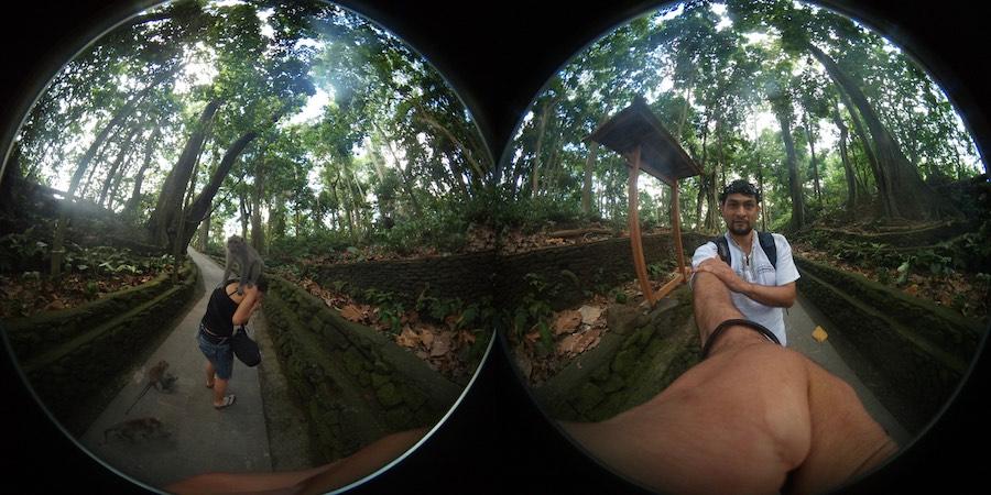 Mokey Forest